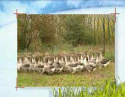 foie gras canard foie gras oie